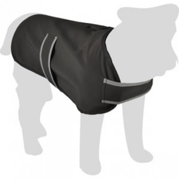 Koera jope Morris 50cm